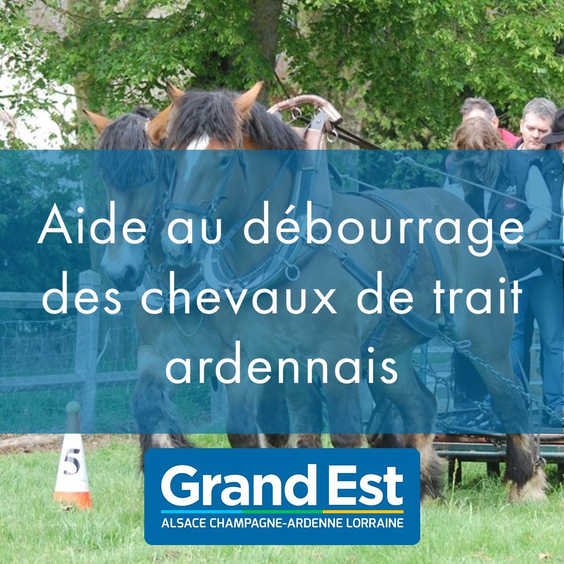 Aide à la valorisation : Débourrage à l'attelage pour les chevaux de trait ardennais
