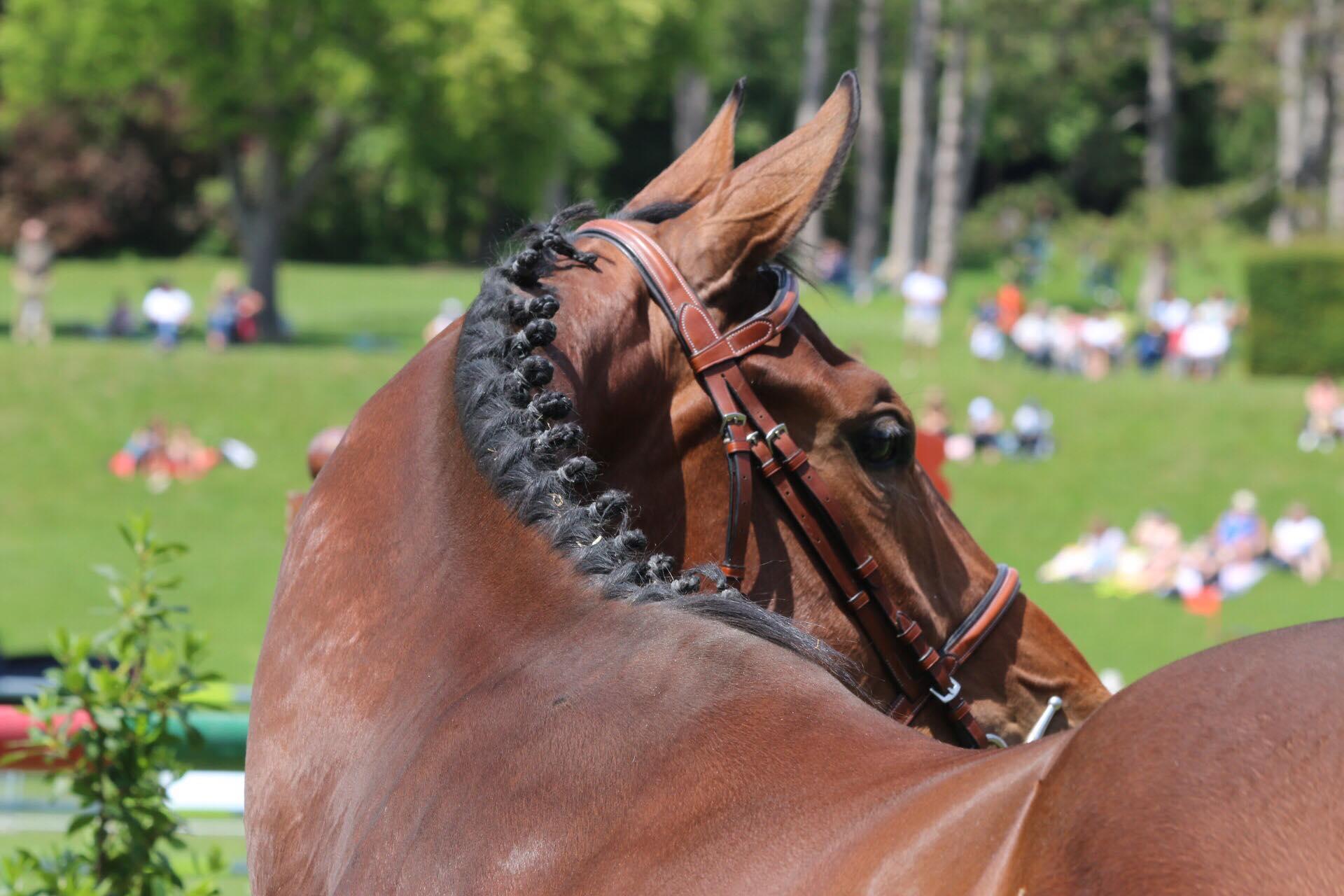 Filière Equine Grand Est